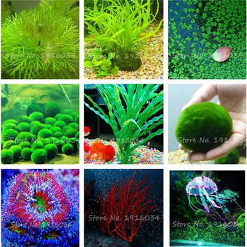 100 Pcs/bag Aquarium Plants Seeds Grass Water Aquatic Plant Seeds Indoor Ornamental Plant Grass Seeds for Home Garden