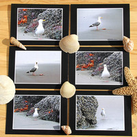 Seagulls Notecard Set of 6 Eco Friendly Photo Greeting Cards