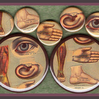 "7 vintage anatomy MIXED SIZE set 1"" inch buttons AND 2.25 aka 2 1/4 inch vintage oddity button set"