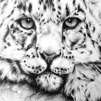 Black and White Snow Leopard Drawing