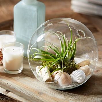 LIVE TABLETOP AIR PLANT GARDEN