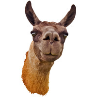 Llama Mount Wall Decal