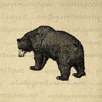 Printable Image Grizzly Bear Download Graphic Digital Illustration Vintage Clip Art for Transfers Printing etc HQ 300dpi No.2566