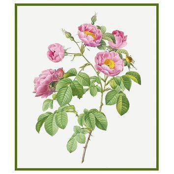 Tomentose Rose Flowers Inspired by Pierre-Joseph Redoute Counted Cross Stitch Pattern