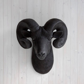 The Rocky Black Faux Taxidermy Resin Ram Head Wall Mount | Black Ram w/ Colored Horns