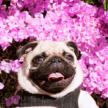 "Happy Pug Photo, Floral Spring Décor, Fine Art Photography, Pug Portrait, Nature Lovers, Cute Wall Art, Spring Photography - 8x12"" print."