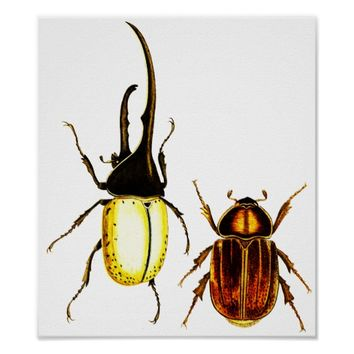 beetles bugs Entomology art poster