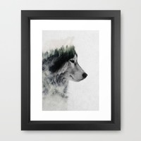 Wolf Stare Framed Art Print by Andreas Lie