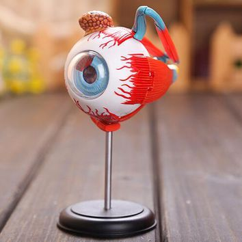 Master 4D eye model 32 pcs assembled  human anatomy model new 3D structure of the eye puzzle
