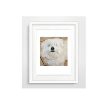 Printable Cute Dog Photo / wall art / animal lovers / white dog / instant photo / home decor / art projects / scrapbook art / greeting cards