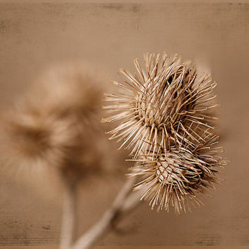 Nature photography fall flower fine art print thistle photo print wall art wall decor botanical home decor brown beige rustic wall decor