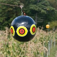 Garden Accessory Bird Scare Terror Eye Baloon 3 Per Pack by David's Garden Seeds