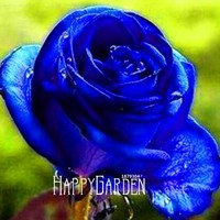 Lowest Price! 50 Pcs/Lot Rainbow rose seeds, Different Colors Rare Rose, Beautiful rose Bonsai plants for home & garden