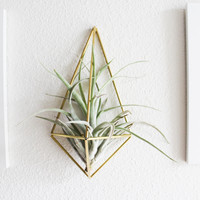 Himmeli fig. 3 - Wall Sconce | Brass Air Plant Holder | Modern Minimalist Geometric Ornament