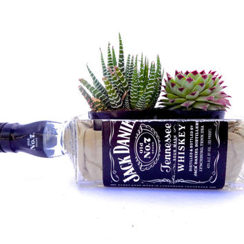Jack Daniels Whiskey Bottle Garden // Succulents Planter Kit