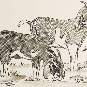 Pen & Ink Drawing of Goats
