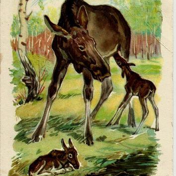 Elk in forest - Vintage  Russian Postcard USSR 1959