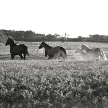 Horses Art Print by DeannaPaullPhotography
