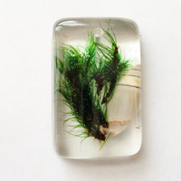 Moss and Shell Pendant, Real Moss and Seashell in Clear Resin