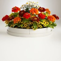 three tier sunny flowers planter + seeds