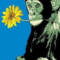 Monkey With Flower Poster Print, 36x24 Poster Print by Steez , 24x36 Poster Print by Steez , 24x36