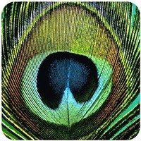 Paperproducts Design Paradise Peacock Coaster Set, Set of 4