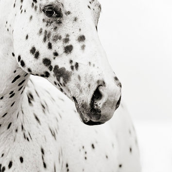 Black and White Horse Photography, 11x14 Fine Art Horse Photograph