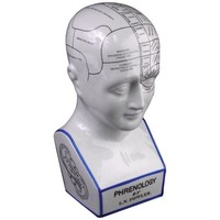 Ceramic Phrenology Head - #J8623 | LampsPlus.com