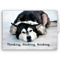 "Alaskan Malamute dog ""thinking of you""  Card from Zazzle.com"