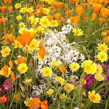 Wildflower Gulf Coast Mix Seeds (7g+Seeds)