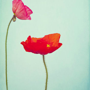 "Floral Photography Red and Pink Poppy Flower Home Decor   ""Poppies"""
