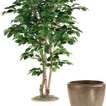 5' Green Ficus Tree In Metallic Bronze Stoneware Pot