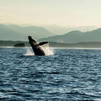 Photo of Whale Breaching with Windmills in the Background, Whale Photography, Humpback Whale Art, Windmill Wall Art, Scenic Photo 4x6-8x12