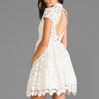 Alice + Olivia Jayna Lace Open Back Flare Dress in Cream
