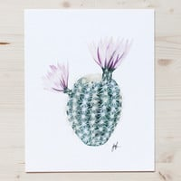 "Our Heiday Flowering Cacti II 8""x10"" Print"