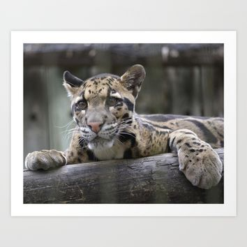 Wild Baby Leopard Art Print by Sea the Forest PhotoArt