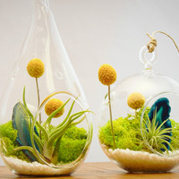 "Bliss Gardens Air Plant Terrarium Kit with 4"" Round Glass, Turquoise Agate and Moss / Surf's Up 4"" Round"