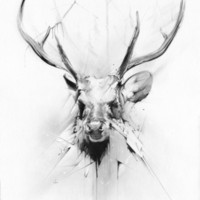 Stag Art Print by Alexis Marcou