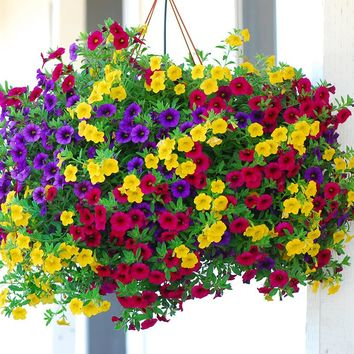 Heirloom Hanging Petunia Mixed Seeds(100 seeds),rare variety, hardy ,Very Beautiful Garden Flowers Light Up Your Garden