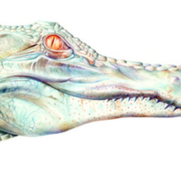 Albino Alligator Art Print by Brandon Keehner