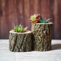 Wood Succulent Holder - Planter