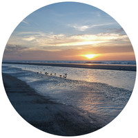 Paul Moore's Sunset Seagull Beach Circle Wall Decal