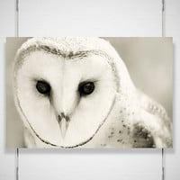 Winter Owl Photography Whiter Shade of Pale 8x12 by jpgphotography