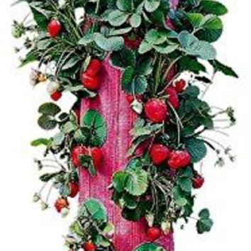 Grow Bag Strawberry Planter Growing bag growing indoor garden Bottoms Up Upside Down Hanging Strawberry  Plante