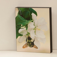 Honeybee  and Apple Blossom Wall Panel - 8x10 Photo Standout, Ready to Hang Nature Photography, Green White Cream Macro Garden Art