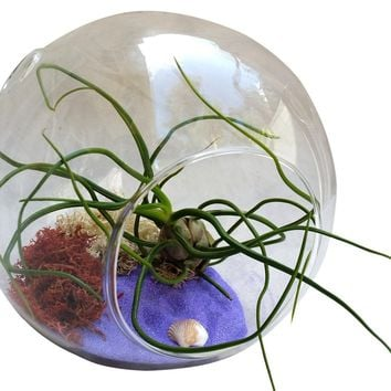 Large Airplant Terrarium