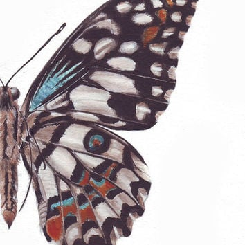 HM097 Original painting watercolor art Butterfly up close by Helga McLeod