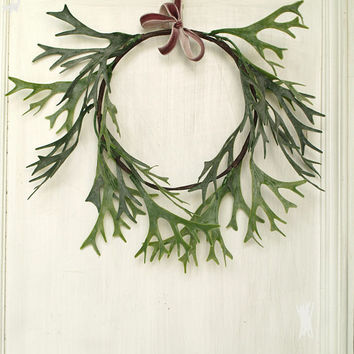 Modern wreath Staghorn fern hanging Fern wreath Minimalist wreath Floral wreath Hoop wreath Door wreath Antler decor Green Christmas wreath