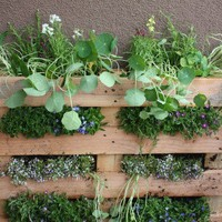 DIY Vertical Garden Made Of A Pallet | Shelterness