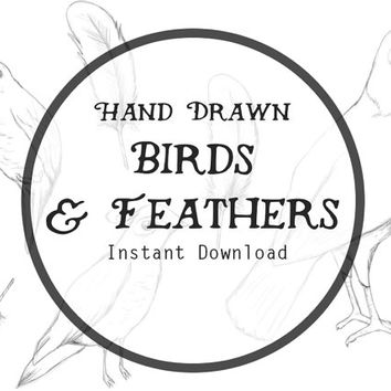 Hand Drawn Birds & Feathers Woodland Art Instant Digital Download, Hand Drawn Clip Art, Feather Download, Feather Clipart, Doodle Clipart.